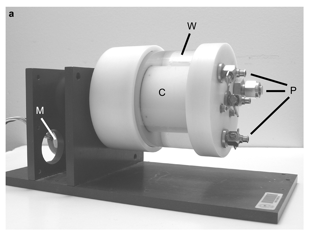 Effects of Simulated Microgravity on the Development of the Swimbladder and Buoyancy Control in Larval Zebrafish (<i>Danio rerio</i>)